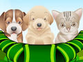 Puppy and Kitten Caring Game for Girls